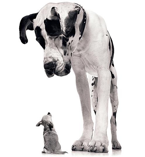 big-dog-little-dog