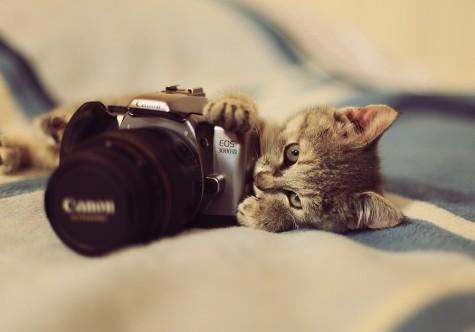 cute cat camera